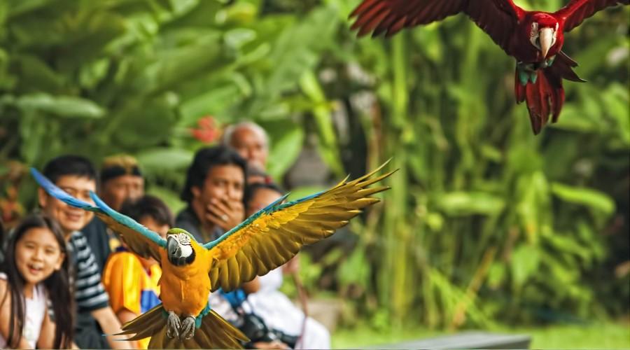 Promo Terbaru, Jual Voucher Murah Bali Bird Park, Beli Secara Online!