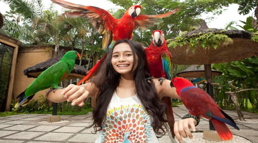Tiket Promo Terbaru Bali Bird Park, Harga Lebih Hemat! Berwisata Mengunjungi Bali Bird Park, Taman Burung Terbesar di Bali