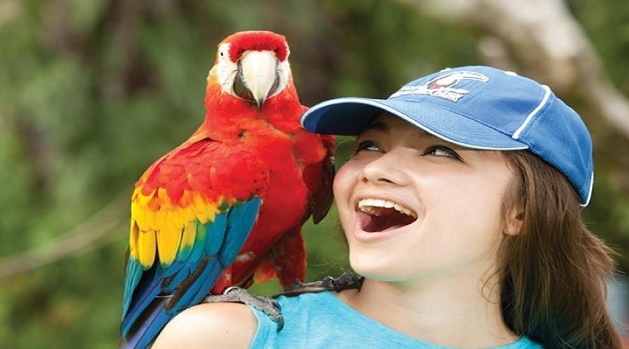 Tiket PROMO Bali Bird Park, Berwisata Mengunjungi Bali Bird Park, Taman Burung Terbesar di Bali