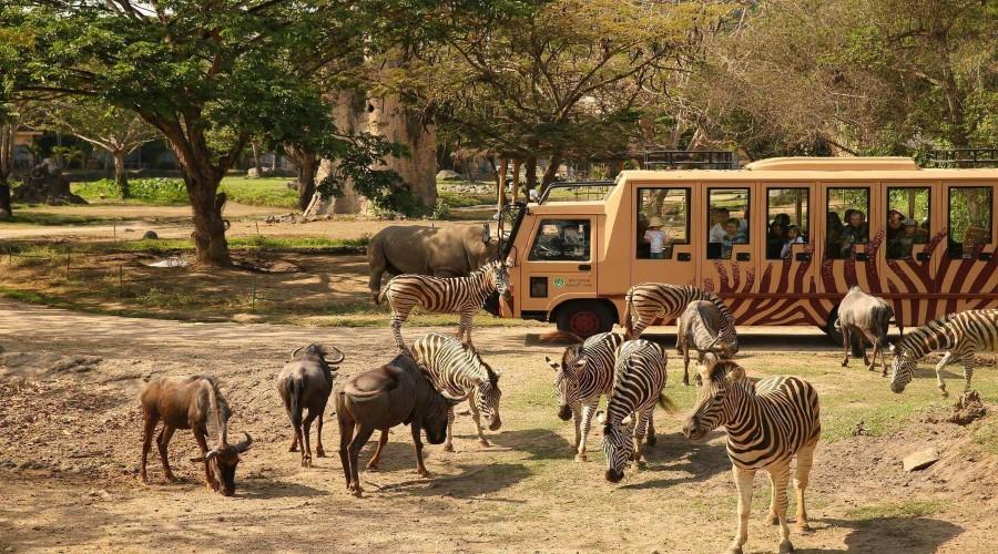 safari explorer untuk dewasa bali safari and marine park rh kebalilagi com