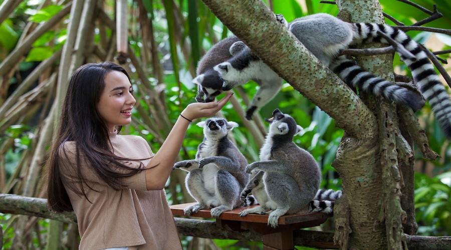 PROMO TERBARU Tiket Bali Zoo, Nikmati Serunya Berwisata ke Bali Zoo Park, Melihat Aneka Macam Satwa
