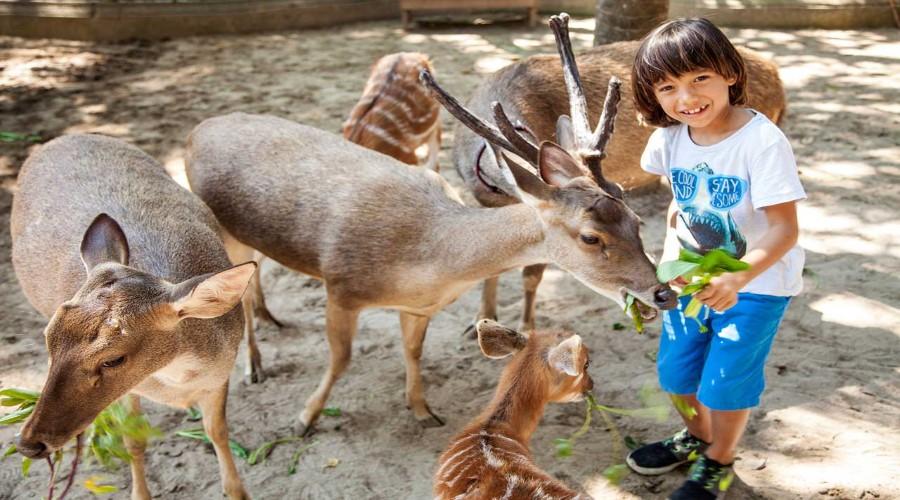 Promo Terbaru, Jual Tiket Murah Bali Zoo Park Secara Online!